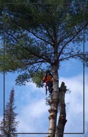 Haliburton Tree Removal - Banner Home